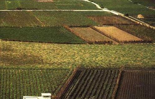 Tipos de suelo recurso educativo 49107 tiching - Clases de suelo ...