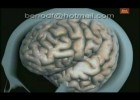 Cerebro y Drogas | Recurso educativo 731239