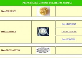 Clasificación Reino Animal | Recurso educativo 746323
